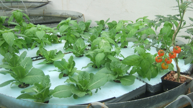 Aquaponic Production