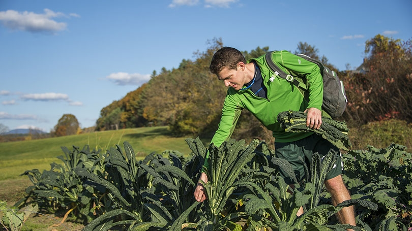 A student picks kale at Dartmouth's organic farm.